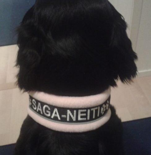 Saga-Neiti