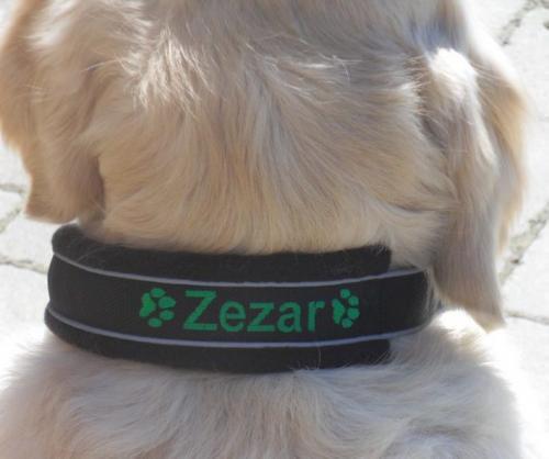 Zezar